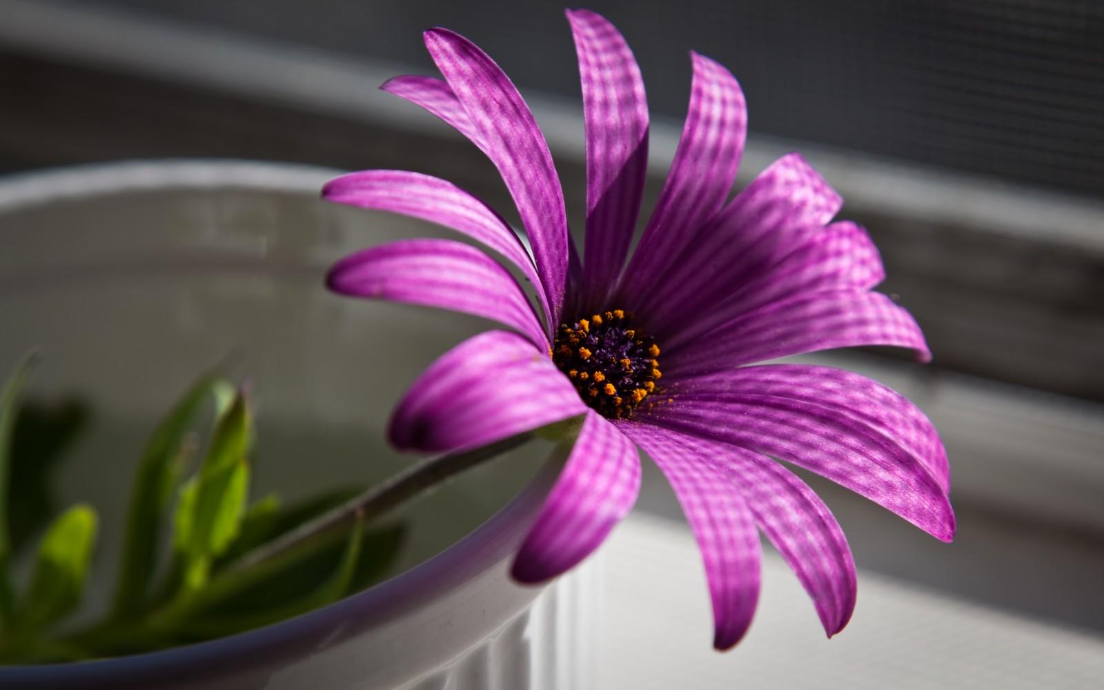 Галерея фотографийфото красивых цветов
