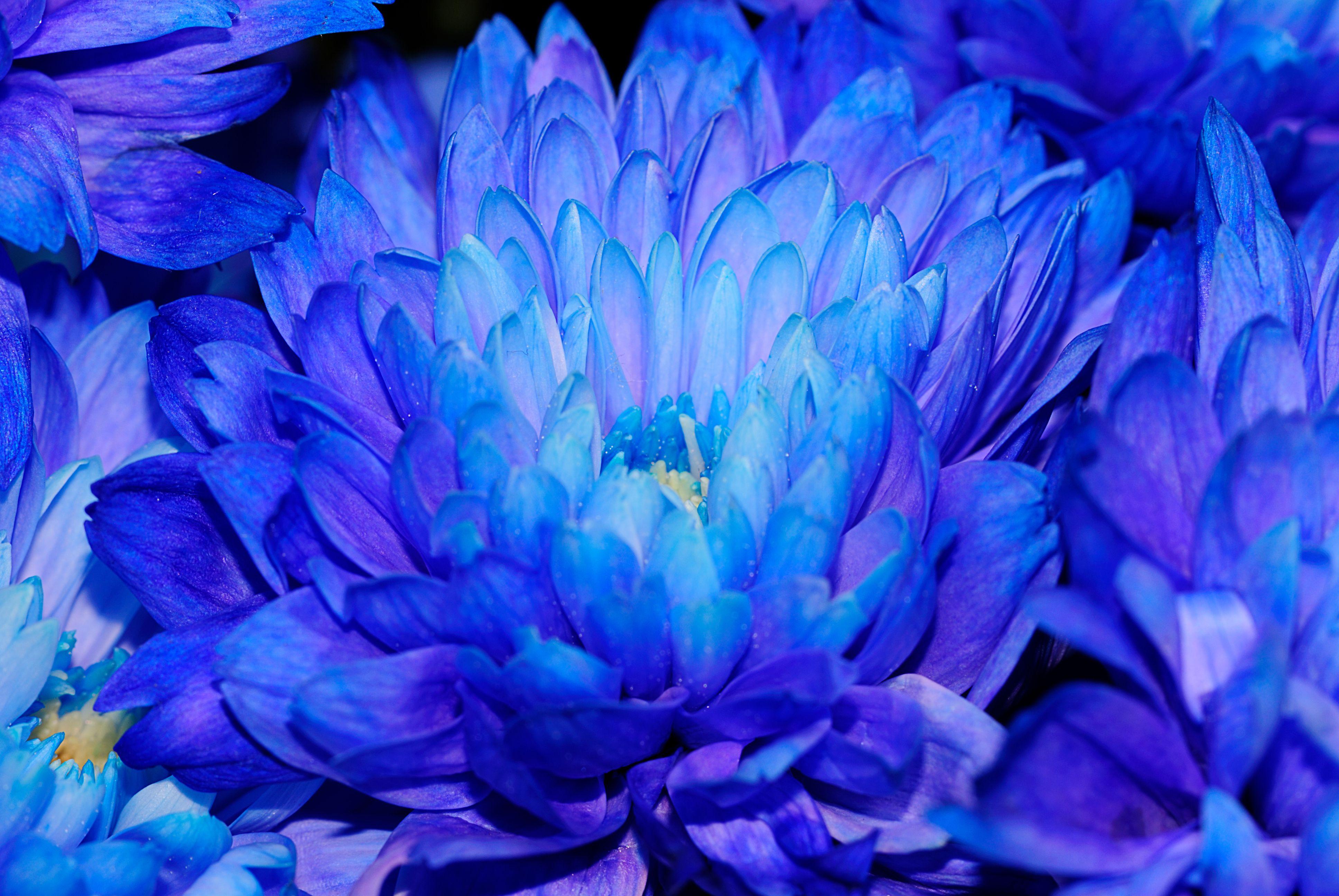 синий цвет фото картинки родилась