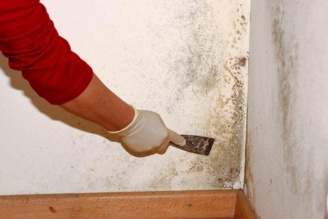 Удаление грибка на стене