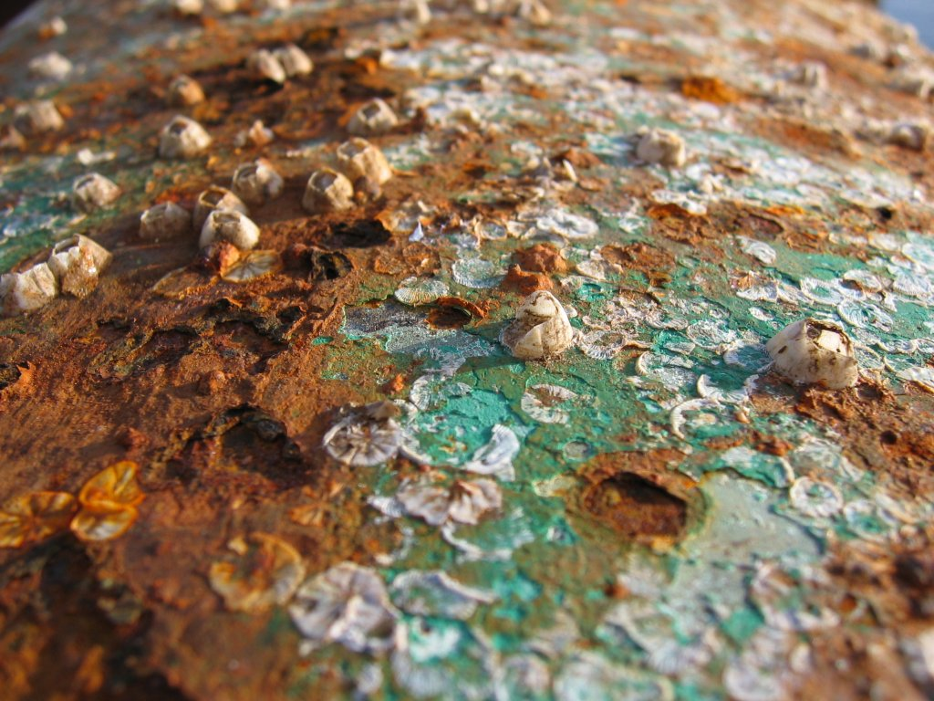 corrosion The road salt makes a mushy, corrosive paste that is flung universally about the under-and over-sides of every vehicle.